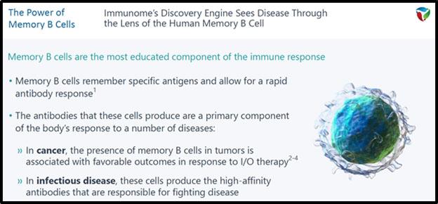 Immunone Memory B Cells